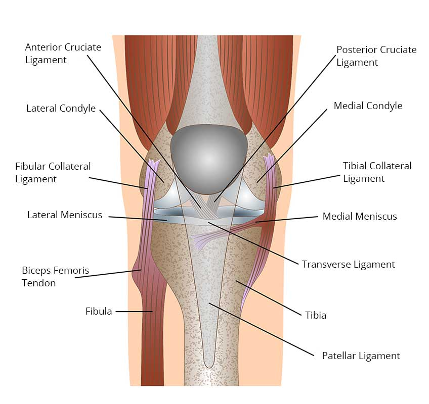 Knee Replacement Surgery, Knee Replacement Options